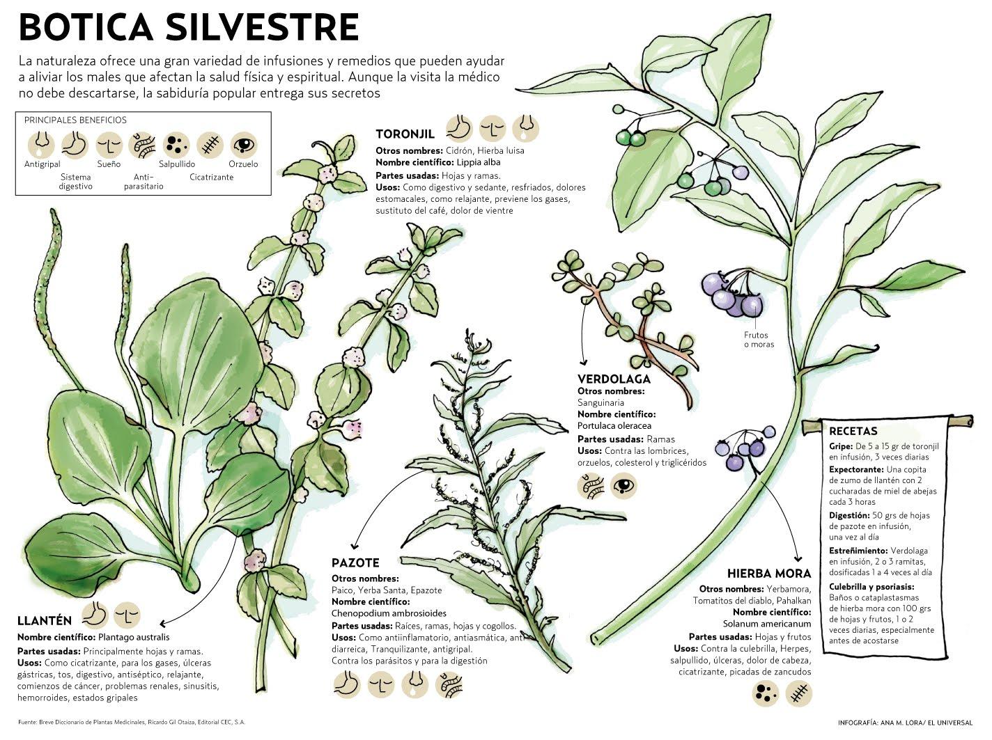 Medicina tradicional espada de luz en tu honor for Tipos de hierbas medicinales